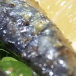 Pourquoi la sardine en boite est-elle si populaire ?
