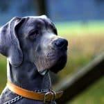 Petits chiens, gros chiens : les frais vétérinaires sont-ils les mêmes ?